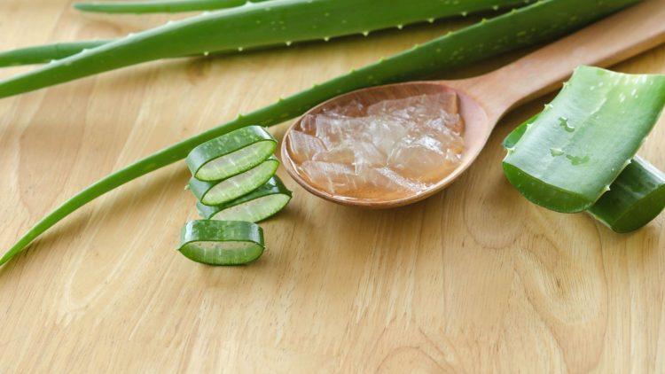 Aloe Vera Blätter auf einem Tisch