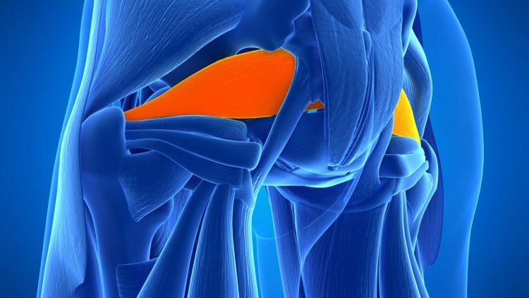 Hüftmusklen