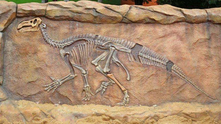 Dinosaurierskelett auf einer Steinplatte